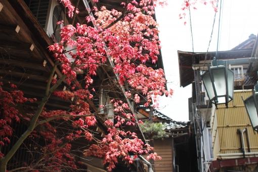 もみじ 紅葉 秋 旅館 温泉 和 日本 和風 レジャー デート 旅行 季節 植物