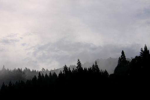 空 曇り 雲 悪天候 外 屋外 景色 風景 森 林 山 樹木 自然 樹 木 シルエット 霧 靄 もや ガス 針葉樹 植物 高地 葉 影
