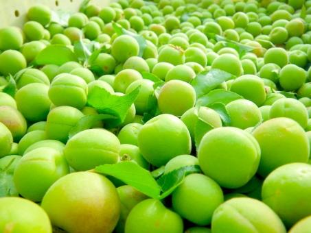 小梅 梅 青梅 くだもの 果実 お弁当 おにぎり おむすび 毎日 梅漬け 梅干し 梅酒 春 カリカリ 完熟 収穫 農家 農業