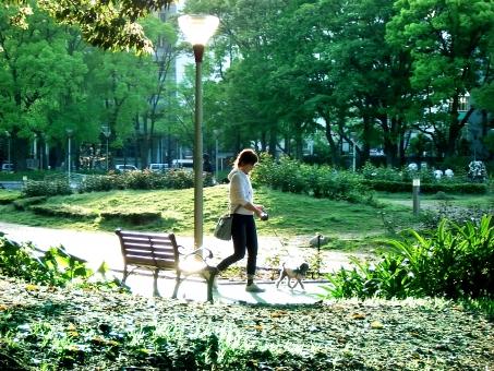 自然 風景 植物 人物 生き物 犬 女性 人 ペット 公園 散歩 新緑 樹木 緑の木の葉 ベンチ 休日 夕景 光透過光 春 初夏 四月・五月 爽やか ポストカード 待ち受け画像 コピースペース バックステージ 背景 季節感 逆光