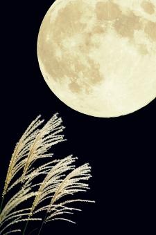 夜空 秋 秋景色 秋の七草 黒背景 ススキ 芒 薄 すすき イネ科 黒バック 自然 風景 植物 白 光 月夜 月光 クレーター 月面 満月 十五夜 望月 フルムーン 合成 中秋の名月 お月様 お月見 moon 縦型