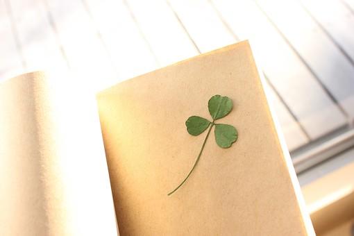 押し花 花 ドライフラワー 小花 植物  美しい かわいい 繊細な 本 ブック 紙 ノート しおり 挟む はさむ 開く クローバー 自然光 屋外 光