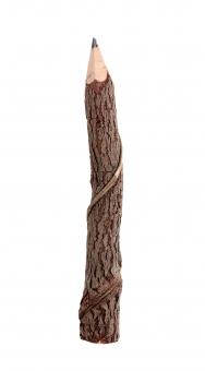 鉛筆 エンピツ えんぴつ 木 枝 木の枝 小枝 木材 文具 文房具 手作り 工作 木工 自然 自然木 エコ エコロジー 余白 スペース コピースペース 文字スペース イメージ 筆記用具 雑貨 小物 シンプル 植物 間伐材 材木 樹皮 質感 枯枝 枯れ枝 背景 木目 茶色 蔓 樹木 天然木 1本 1つ 白バック 白背景 無人 人物なし 幹 木肌