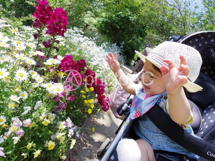 野花と4の写真