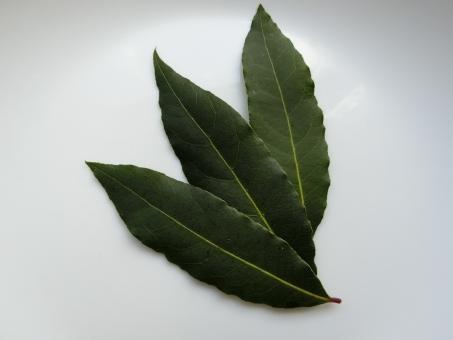 月桂樹の葉 月桂樹 ゲッケイジュ ハーブ ローリエ ろーりえ herb