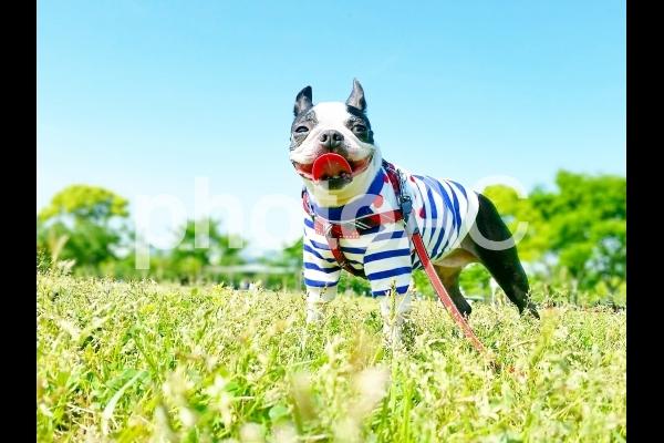 犬「お散歩楽しいね」の写真