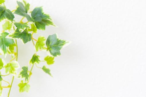 自然 植物 樹木 葉っぱ 木の葉 新緑 緑 グリーン 初夏 夏 爽やか 木漏れ日 光 透過光 マイナスイオン 清潔感 澄んだ空気 若葉 眩しい テクスチャー 5月 壁 壁紙 カフェ テクスチャ インテリア ナチュラル アンティーク 板 おしゃれ 雑貨 ベージュ ウォール リメイク リノベーション 温もり 白壁 白 コピースペース イメージ クリーン