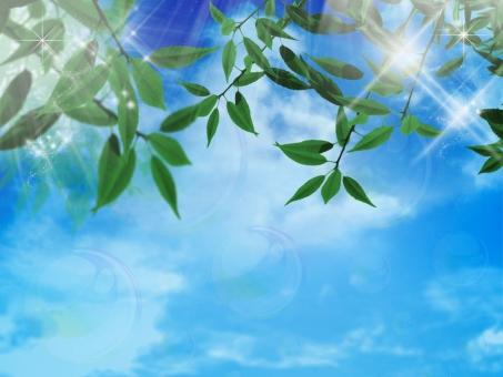 葉と空04の写真