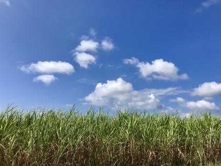 波照間島 さとうきび畑の写真