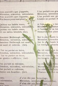押し花 花 ドライフラワー 小花 植物 白バック 背景 背景素材 美しい かわいい 繊細な 白 白い アリッサム 2本 英字新聞 英語 楽譜 アンティーク