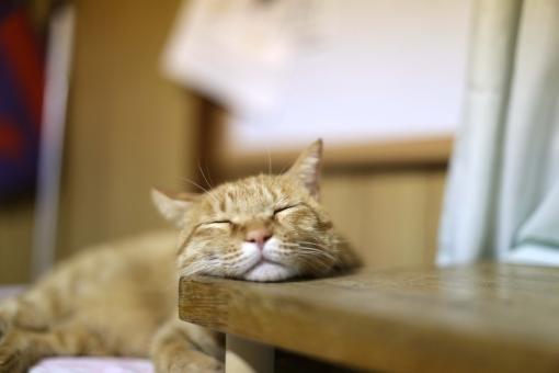 猫 ねこ ネコ にゃんこ 寝る子 neko あご あご乗せ 顎 寝る 茶トラ 机 家族 ペット 可愛い 愛おしい 愛らしい ラブリー キュート 猫の日 肉球の日 猫ブーム モフモフ ほんわか