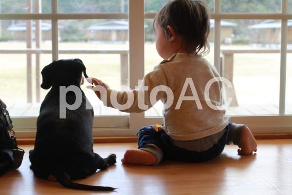 犬と男の子の写真