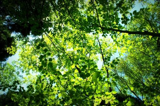 初夏 木々 林 森 木 葉 立夏 新緑 節気 季節 節季 二十四節気 皐月