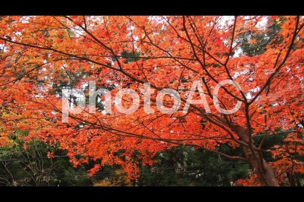 箱根の紅葉の写真
