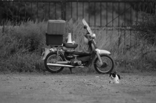 ねこ ネコ 猫 バイク bike cat animal 哀愁 白黒 モノクロ