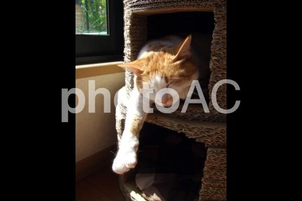 だらける猫3の写真