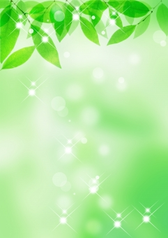 新緑背景の写真