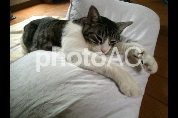 やる気の無い猫の写真
