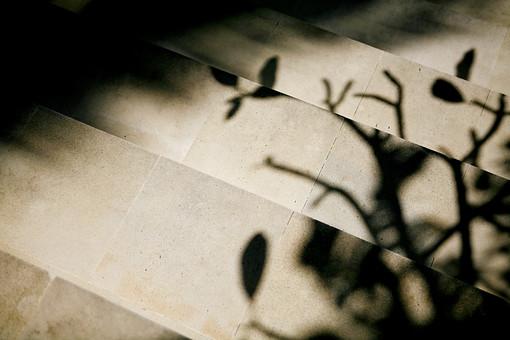 セピア 階段 影 シルエット 植物 白黒 モノクロ シンプル 背景 背景素材 降りる 登る 昇降 草 枝 段差 テクスチャ テキストスペース コピースペース 黒