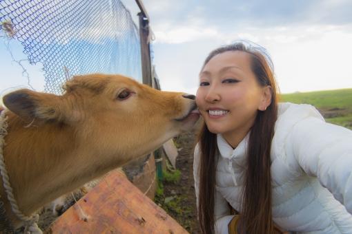 牛に舐められる女性の写真
