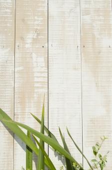 板壁 木製 壁 かべ カベ 植物 花 素材 ウッド 木 葉 葉っぱ 緑 グリーン テキストスペース 文字スペース 背景 背景素材 コピースペース diy カフェ レストラン ショップ バック バックグラウンド テクスチャ 縦