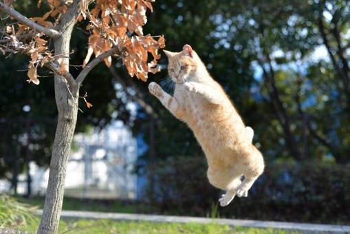 JUMP!の写真