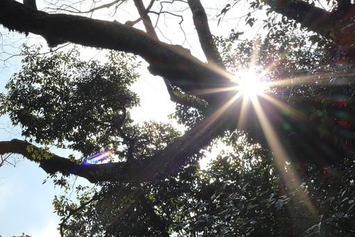 眩しい 光り 木漏れ日 太陽 日差し 自然 景色 風景 植物 樹木 木 樹 葉 葉っぱ 空 癒し 森林浴 雲 青空 エネルギー 浄化 休憩 光の筋 元気 パワー
