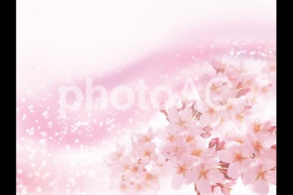 桜とピンクの輝き抽象背景素材テクスチャの写真