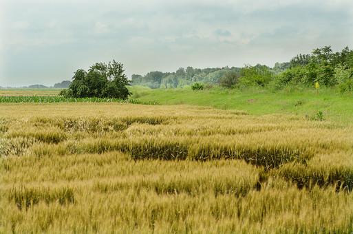 大草原 草原 自然 大自然 アフリカ 大地 めぐみ 荒野 遠い 草むら 生い茂る 茂み 黄金色 木 草木 木々 広い台地 植物 外国 荒地  野原 里山 野山