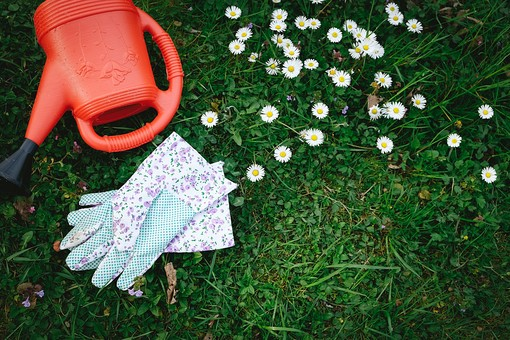 ガーデニング 園芸 花 白 草花 フラワー 植物 じょうろ 水やり 軍手 手袋 グローブ 置く 倒す 放置 無造作 群生 ガーデン 庭 庭園 芝 芝生 庭仕事 庭いじり 作業 手入れ 園芸用品 屋外 野外