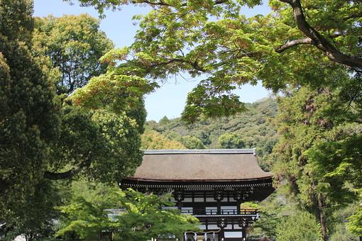 日本 関西 京都 嵐山 洛西 松尾大社 観光 観光地 観光客 旅行 見物 見学 自然 植物 木 樹木 葉 葉っぱ 緑 山 森 林 森林 空 青空 建物 建築物 建築 木造 無人 室外 屋外 風景 景色 歴史 伝統 宗教 神社
