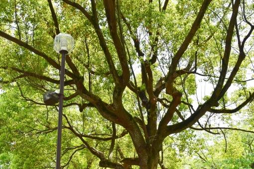 新緑 しんりょく 3月 4月 5月 6月 葉 葉っぱ 緑 黄緑 みどり きみどり 自然 綺麗 爽やか 見上げる 人気 植物 樹木 新鮮 森 林 公園 グリーン 暖かい 季節 若草色 若葉 木洩れ日 木漏れ日 こもれび 明るい 気分 最高 気持ちが良い 空気 クリーン 森林浴 背景 テクスチャ 壁紙 バックグラウンド ヒーリング リラックス 癒し マイナスイオン 初夏 リラクゼーション 涼しい セラピー エコ eco アップ 可愛い かわいい 小さい 雑草 草原 野原 散歩 散歩道 石畳 橋 石の橋 川 流れる 小川 石 岩 木 木の下 街燈 街灯 春 夏 秋