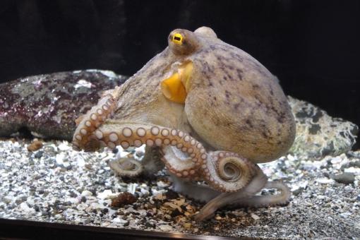 水族館 水 うお さかな フィッシュ 泳ぐ 水槽 夏 サマー タコ 吸盤 つぶつぶ
