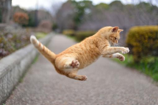 猫 ねこ ネコ のら猫 ノラ猫 野良猫 地域ネコ 地域猫 チイキ猫 仔猫 子猫 子ねこ 可愛い猫 カワイイ猫 かわいい猫 ジャンプ JUMP CAT cat 春 はる 冬 ふゆ 三月 3月 チャトラ 公園 木々 木 樹木
