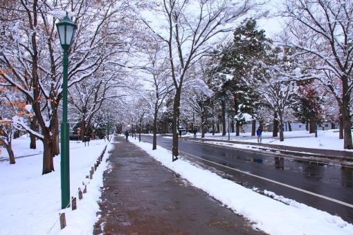 北海道大学 大学 北大 大学構内 道路 積雪 雪 冬 湿った雪
