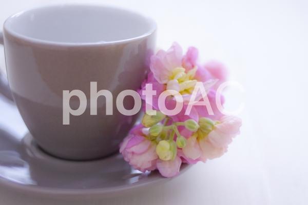 コーヒーカップとストックの花の写真