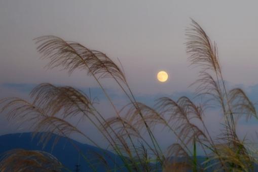 月 満月 中秋の名月 十五夜 望月 ススキ 芒 薄 イネ科 空 夕方 秋 お月様 風景 景色 すすき ムーンライト 月明かり 月光 自然 背景 moon 空多め ススキと空 月と空