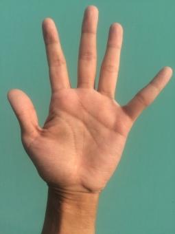 左手 ハンド hand 掌 パーツ ジェスチャー ハンドサイン サイン 健康 血管 占い 手の平 ハンドパーツ てのひら 指紋 関節 手汗 皮膚 スキン 肌 ハンドケア 平手 美容 保湿 乾燥 肌色 ゆび て 手首 手荒れ 男性 手 手のひら 素手 素肌 手入れ 生命線 結婚線 指 手相 5 ご five 拾い 挙手 はーい ハーイ 声 大きい 大きな声 背景 緑 緑色 ブルーバック グリーンバック