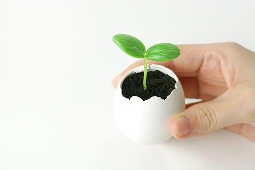 発芽に関する写真写真素材なら写真ac無料フリーダウンロードok