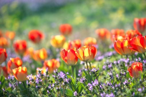 自然 風景 植物 花 花畑 野原 野山 森林 公園 春イメージ 春 新緑 若葉 新芽 四月・五月 光を浴びて 光透過光 ビタミンカラー わいわいがや゛かや 元気いっぱい 賑わい 季節感 ポストカード コピースペース 待ち受け画像 背景 若々しい 野外アウトドア 爽やかイメージ バックスペース