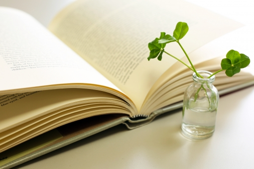 昼下がりの読書の写真