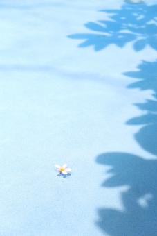 南国 南の島 常夏の国 南方の楽園 ビーチリゾート リゾート 南の国 癒し 観光地 観光都市 旅行 旅 トラベル 休日 バカンス ホリデー バケーション 自然 スナップ 花 植物 白 花びら 5枚 プール 影 プラメリア スパ エステ バリ プルメリア