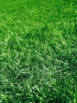 芝 芝生 縦 緑 グリーン 自然 天然芝 サッカー 野球 球場 グラウンド サッカー場 フィールド 植物 葉 草 地面 庭 ガーデニング 青々 春 夏 背景 テクスチャ バック バックグラウンド 環境 エコ 草原 原っぱ
