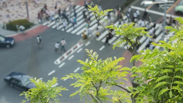 ビルの上から見た交差点 横断歩道 自動車 自然 緑 葉 グリーン アースアンドエコロジー 日常 慌ただしい 騒々しい 喧噪の中で 都会のオアシス 休憩 俯瞰 木の上から ボケ味 行き交う人々 車道 青信号 信号待ち