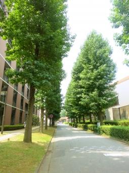 筑波大学 筑波 つくば 校舎 並木 大学 入試 学生 サークル 茨城