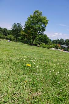 山奥 山 深緑 緑 グリーン 新鮮 空気 酸素 空 快晴 晴れ 晴天 曇り 白い雲 自然 環境 問題 エコ 青空 ブルースカイ 空 一本木 樹木 植物 芝 広場 シロツメグサ タンポポ 春 夏 草花 花 フラワー 押し花