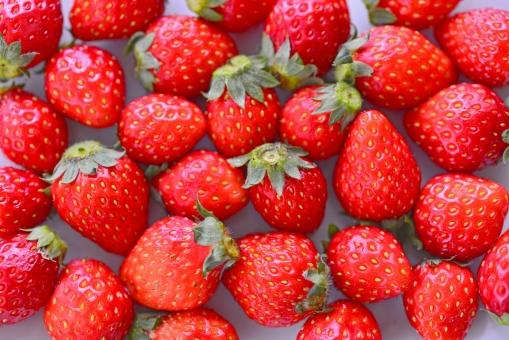 苺 イチゴ いちご フルーツ 果物 赤い果物 小粒苺 苺画像 イチゴ画像 いちご画像 フルーツ画像 真っ赤なイチゴ 苺狩り イチゴ狩り いちご狩り 美容 健康 果実 ビタミンc 食べ物 くだもの 農園 摘む 甘いフルーツ 食材 食糧