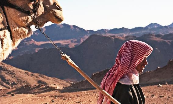 エジプト ラクダ 動物 生き物 生物 移動手段 シナイ山 ホレブ山 山脈 シナイ半島 モーゼ モーセ 神 十戒 岩山 岩肌 山肌 巡礼者 観光客 人物 自然 景色 風景 情景 絶景 広大 雄大 外国 海外 異国 旅行 観光 名所