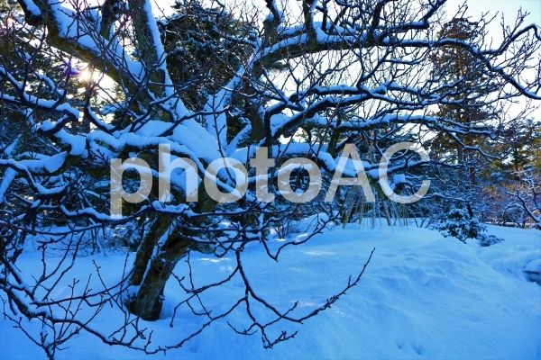 雪の積もった木の写真