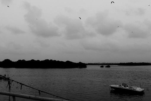 白黒 モノクロ 海 うみ ビーチ 悪天候 曇り 雲 空 鳥 水鳥 舟 ボート 船 島 とり 自然 樹木 植物 樹 森 海面 水面 穏やか 曇り空